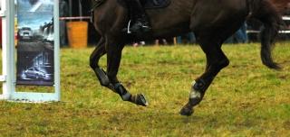 zawody-skoki-konie